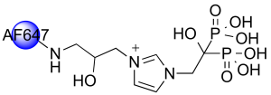 AF647-ZOL